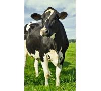FidMix Hovädzí dobytok 10kg
